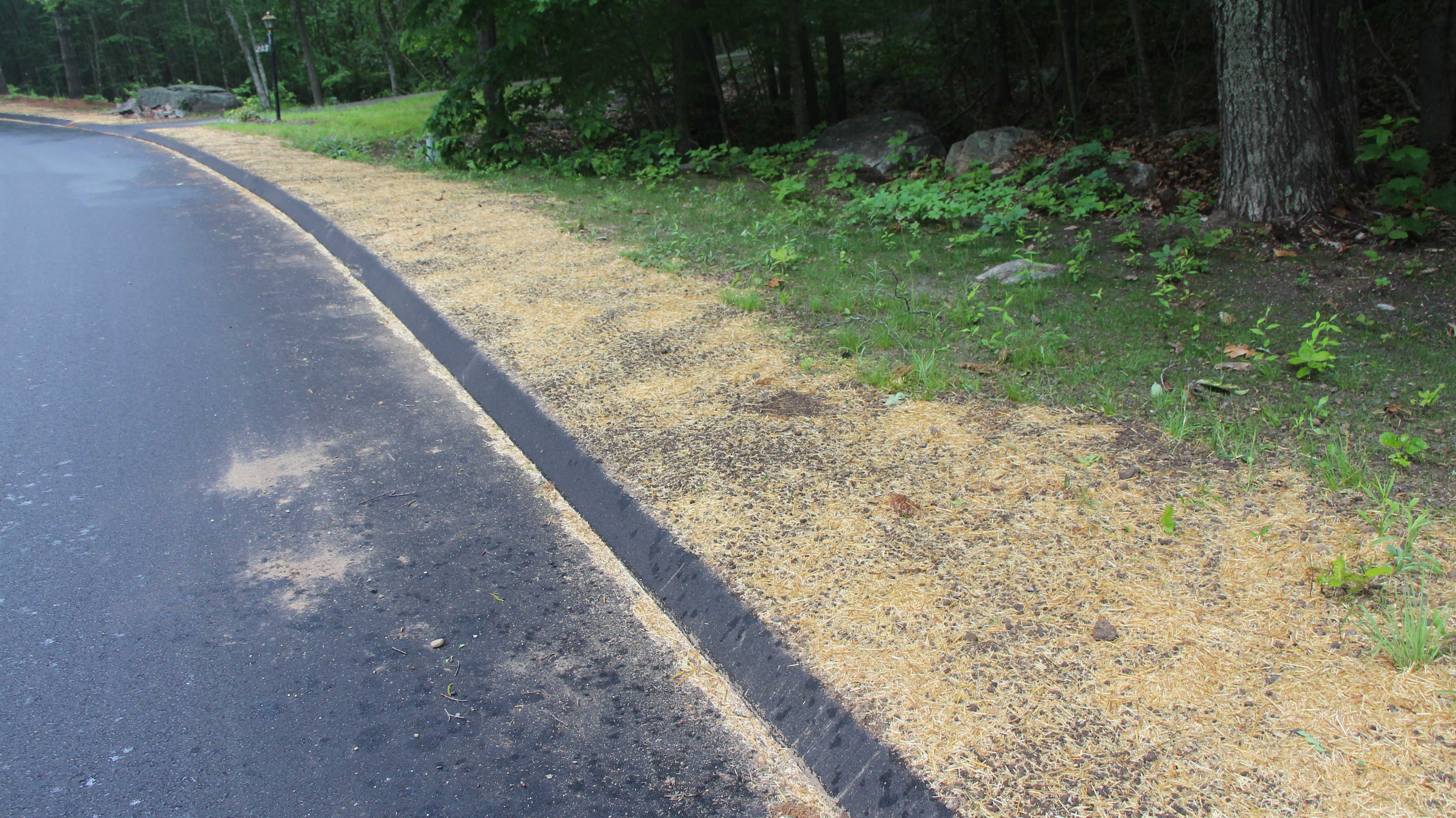 silver birch lane